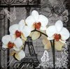 9056 Paris Orchideen Serviette