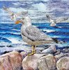 11805 Seagulls on rocks Serviette
