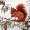 11304 Hungry Squirrel Serviette