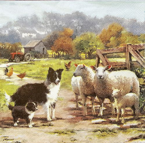 11647 Border Collie mit Schafe Serviette