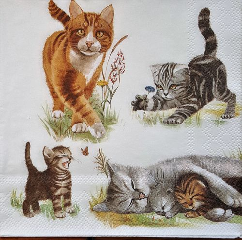 11656 Cats Family Serviette