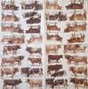 11675 Cows Serviette